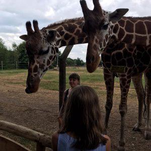 Minilager 2019: Füttern der Giraffen